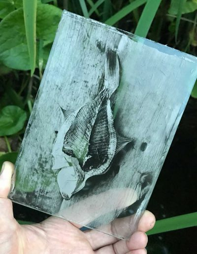 Fish 3 Glass Plate - Wetplate Collodion_