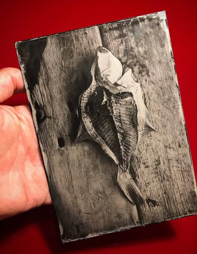 Fish Tintype - Wetplate Collodion
